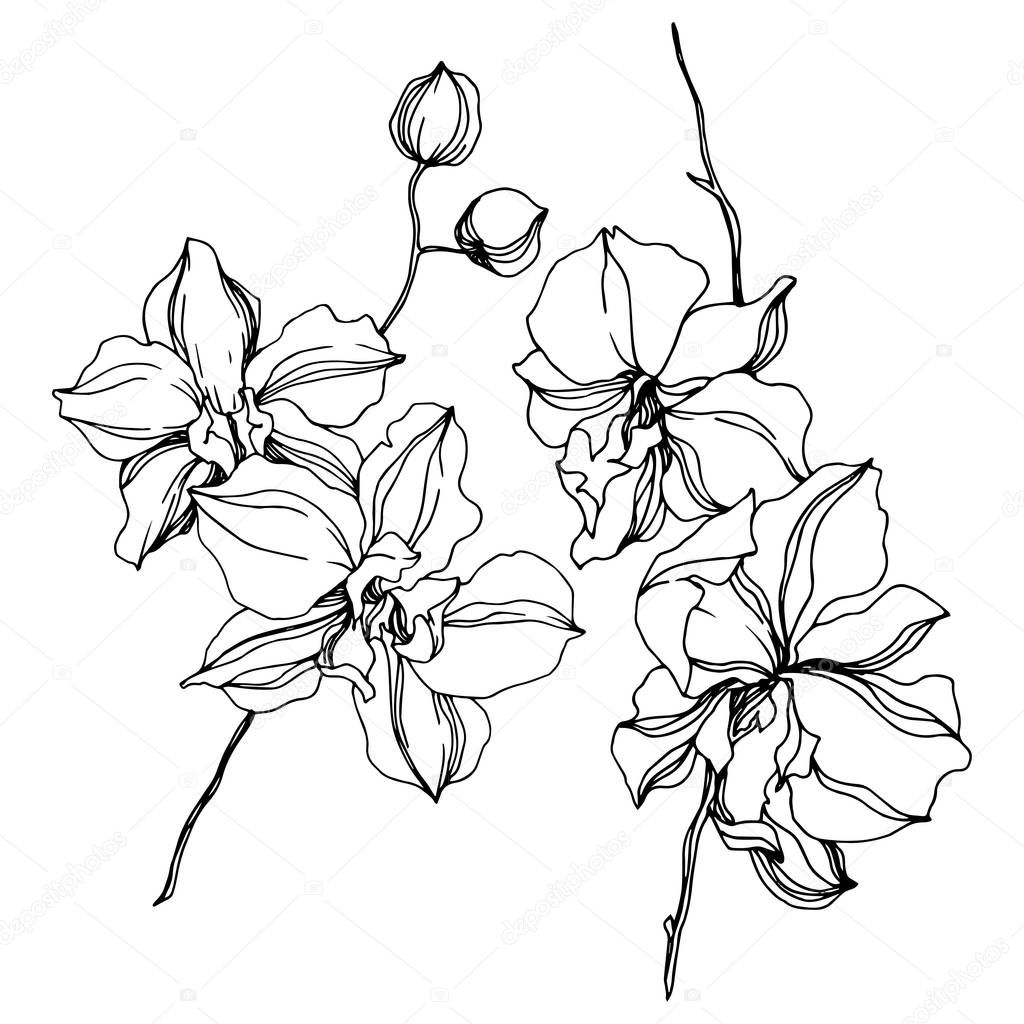 Orchid floral botanical flowers. Wild spring leaf wildflower isolated. Black and white engraved ink art. Isolated orchids illustration element on white background. clipart vector
