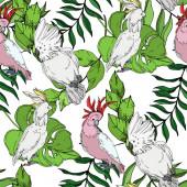 Vektor Sky madár kakadu a vadon élő állatok. Fekete-fehér vésett tinta Art. Folytonos háttérmintázat.