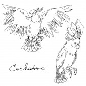 Fényképek Vector Sky bird cockatoo in a wildlife isolated. Black and white engraved ink art. Isolated parrot illustration element.