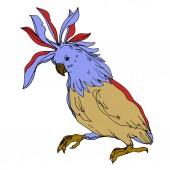 Vector Sky pták kakadu v divočině izolované. Černobílý rytý inkoust. Izolovaný papouščí ilustrační prvek.