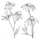Vector wildflowers floral botanical flowers. Black and white engraved ink art. Isolated flower illustration element.