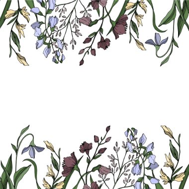 Vector Wildflower floral botanical flowers. Wild spring leaf wildflower isolated. Black and white engraved ink art. Frame border ornament square on white background. clip art vector