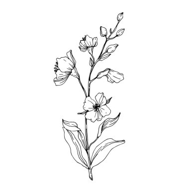 Vector Wildflower floral botanical flowers. Wild spring leaf wildflower isolated. Black and white engraved ink art. Isolated flower illustration element. clip art vector