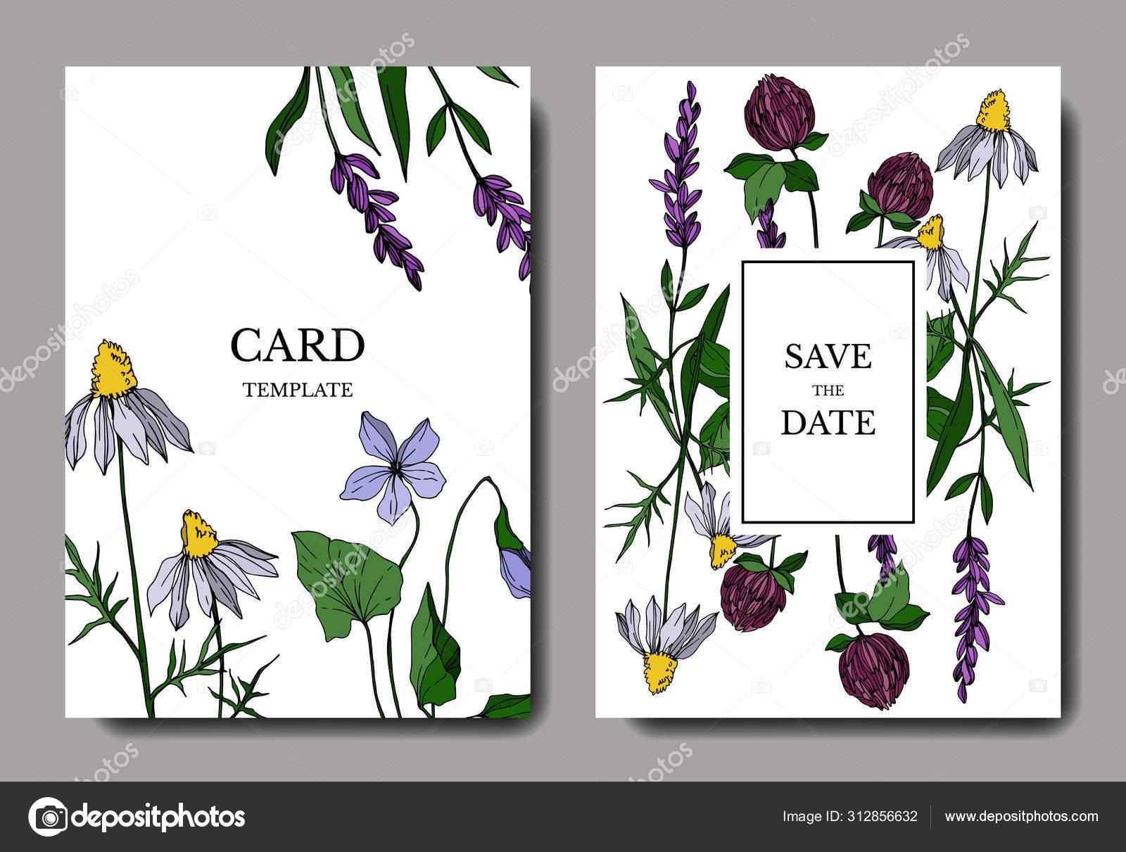 Vector Wildflower Floral Botanical Flowers Engraved Ink Art