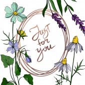 Vektor vadvirág virágos botanikai virágok. Fekete-fehér vésett tinta művészet. Keret határ dísz tér.