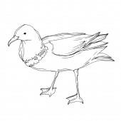 Vektor Sky madár sirály elkülönítve. Fekete-fehér vésett tinta művészet. Elszigetelt sirály-illusztrációs elem.