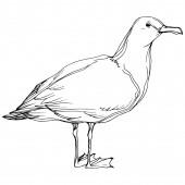 Vektorový ptačí pták v divoké přírodě. Černé a bílé ryté inkoustem. Izolovaný prvek izolovaného seagullu.