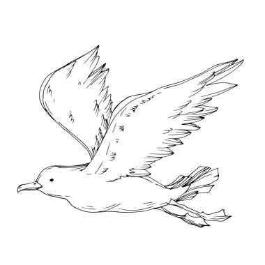 Vector Sky bird seagull isolated. Wild freedom, bird with a flying wings. Black and white engraved ink art. Isolated seagull illustration element on white background. stock vector
