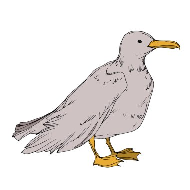 Vector Sky bird seagull isolated. Black and white engraved ink art. Isolated seagull illustration element.