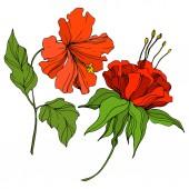 Fényképek Vektor trópusi botanikai virág. Egzotikus hawaii nyár. Vésett tintaművészet. Izolált virág illusztrációs elem.