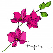 Vector Tropical botanical flower. Exotic hawaiian summer. Engraved ink art. Isolated flowers illustration element.
