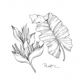 Vector Tropical floral botanical flowers. Black and white engraved ink art. Isolated flower illustration element.