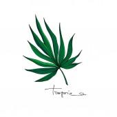 Vektor Palm Beach fa elhagyja dzsungel botanikai. Fekete-fehér vésett tinta művészet. Izolált levelek illusztrációs eleme.