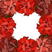 Vektor růže květinové botanické květiny. Černobílý rytý inkoust. Ozdobný rámeček rámečku.