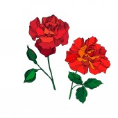 Vector Rose floral botanical flowers. Red and green engraved ink art. Isolated rose illustration element.
