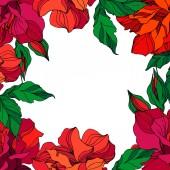 Vektor Rose virágos botanikai virágok. Zöld ahd vörös vésett tinta művészet. Keret határ dísz tér.