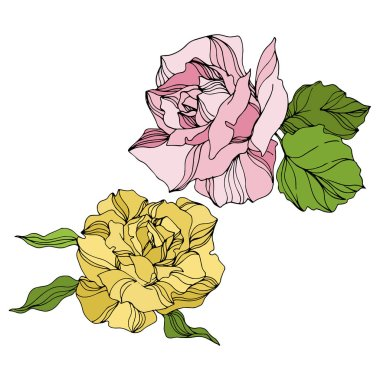 Vector Rose floral botanical flowers. Wild spring leaf wildflower isolated. Engraved ink art. Isolated roses illustration element on white background. stock vector
