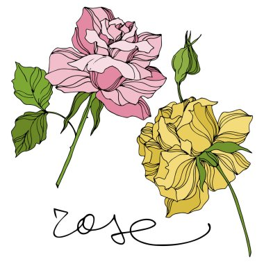 Vector Rose floral botanical flowers. Engraved ink art. Isolated roses illustration element.