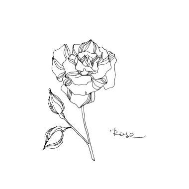 Vector Rose floral botanical flower. Black and white engraved ink art. Isolated rose illustration element.