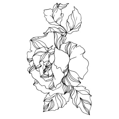 Vector Roses floral botanical flowers. Wild spring leaf wildflower isolated. Black and white engraved ink art. Isolated rose illustration element on white background. stock vector