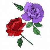 Vector rose floral botanical flowers. Black and white engraved ink art. Isolated roses illustration element.
