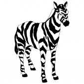 Vector Exotic zebra wild animal isolated. Black and white engraved ink art. Isolated animal illustration element.
