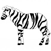 Photo Vector Exotic zebra wild animal isolated. Black and white engraved ink art. Isolated animal illustration element.