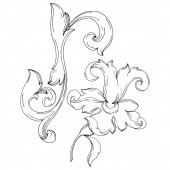 Vector Baroque monogram floral ornament. Black and white engraved ink art. Isolated ornaments illustration element.