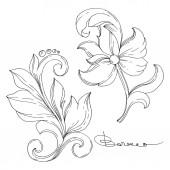 Vektor arany monogram virágdísz. Izolált dísztárgy illusztrációs elem. Fekete-fehér vésett tinta művészet.
