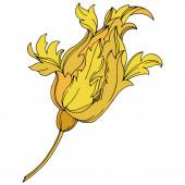 Vektor arany monogram virágdísz. Fekete-fehér vésett tinta művészet. Izolált monogram illusztrációs elem.