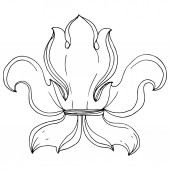 Vector Baroque monogram floral ornament. Black and white engraved ink art. Isolated monogram illustration element.
