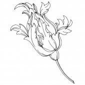 Vektorový barokní monogram květinové ozdoby. Černobílý rytý inkoust. Izolovaný ilustrační prvek monogramu.