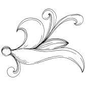 Vector Baroque monogram floral ornament. Black and white engraved ink art. Isolated monogram illustration element.