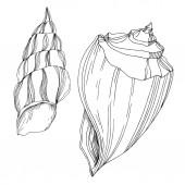 Vektor Sommer Strand Muschel tropischen Elementen. schwarz-weiß