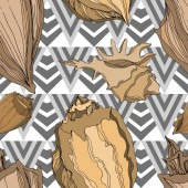 Vector Summer beach seashell tropical elements. Brown beige Engr