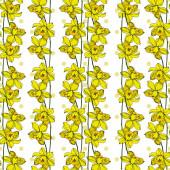 Vektor Narcis květinové botanické květiny. Černobílý engra