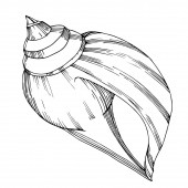 Fotografie Vector Summer beach seashell tropical elements. Black and white