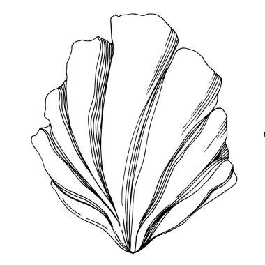 Vector Summer beach seashell tropical elements. Black and white engraved ink art. Isolated shells illustration element on vhite background. clip art vector