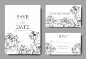 Vektor bazsarózsa virágos botanikai virágok. Fekete-fehér vésett tinta művészet. Esküvői háttér kártya virágos dekoratív határ. Köszönöm, rsvp, meghívó elegáns kártya illusztráció grafikus készlet banner.