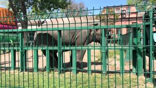 Adult elephant eat green grass in wilderness in sunny day
