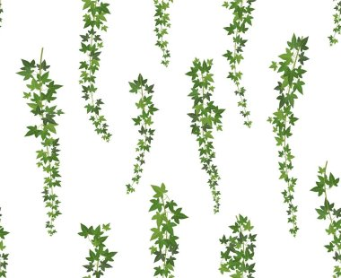 Creeper green ivy. Wall climbing plant hanging from above. Garden decoration ivy vines. Seamless background illustration