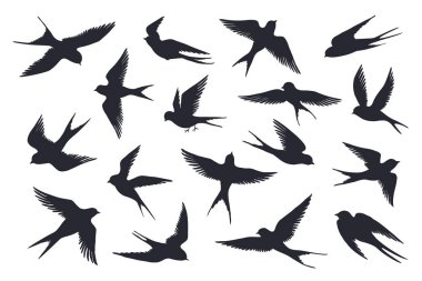 Flying birds silhouette. Flock of swallows, sea gull or marine birds isolated on white background. Vector set of different steps