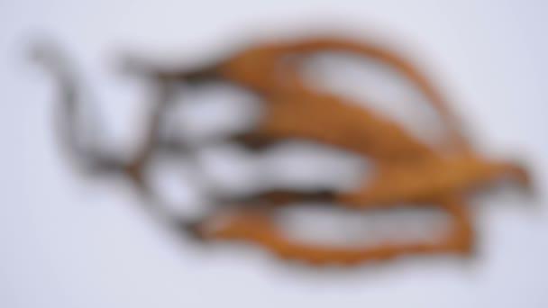 Vyberte zaměření houby cordyceps