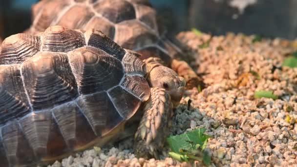 4k zár megjelöl szemcsésedik-ból egy sivatagban teknősbéka