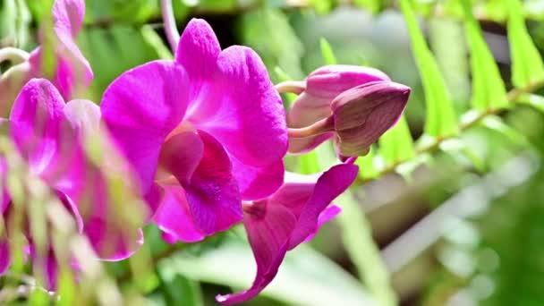4 k asijské orchidej květina v zahradě