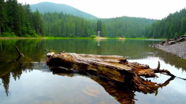 Kapky deště spadnout na jasné povrchu jezero Synevyr s výhledem na staré log na popředí a svěží jehličnatého lesa, kolem břehů, Ukrajina.