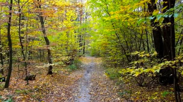 Malebnou podzimní přírodou s úzkou cestu podél hlubokého lesa, soustružení černá a bílá.
