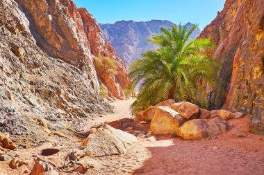 The nature of Sinai, Egypt