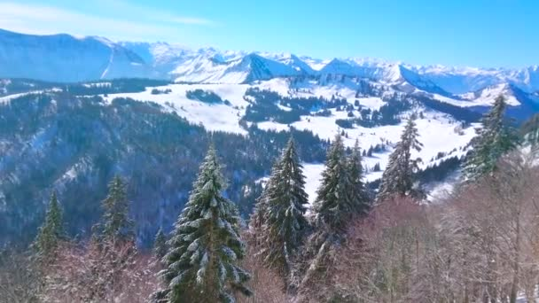 The line of frozen fir trees along the slopes of Zwolferhorn mount with a view on Spielbergalm peak, Alpine landscape and Wolfgangsee lake on the background, St Gilden, Salzkammegut, Austria.