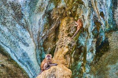 Monkey beach, Phi Phi Leh Island, Krabi, Thailand